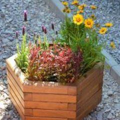 Kącik Ogrodnika: Jak stworzyć własne kompozycje roślinne na balkon lub taras