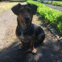 Dzisiaj w Marszowicach znaleziono psa