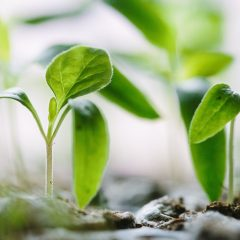 Ochrońmy nasze rośliny – to będą prawdziwi Zimni Ogrodnicy i Zimna Zośka