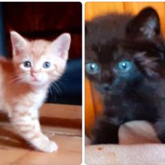 Do oddania trzy urocze kociaki