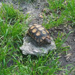 Czy widziałeś tego żółwia?